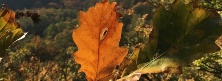 كيف تحتضن الخريف